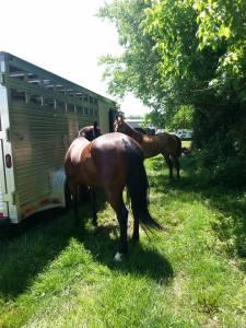 Client horses at a barrel race.
