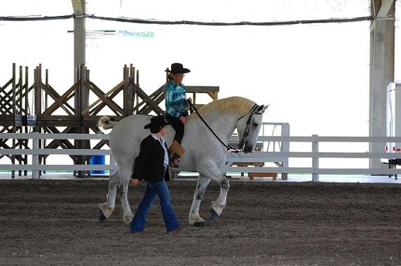 white horse resize